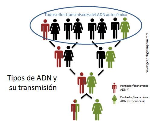 Transmisión del ADN